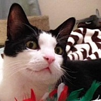 Adopt A Pet :: Billie - Ventura, CA