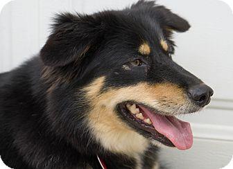 Shepherd (Unknown Type) Mix Dog for adoption in Reidsville, North Carolina - Bashful