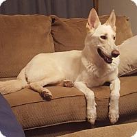 Adopt A Pet :: Santos - Phoenix, AZ
