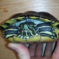 Adopt A Pet :: Paul - Pefferlaw, ON