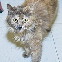 Adopt A Pet :: Bella - Pittsburg, KS