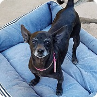 Adopt A Pet :: PRECIOUS - Ojai, CA