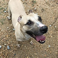 Shepherd (Unknown Type) Mix Dog for adoption in Jackson, Mississippi - Noel
