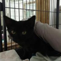 Adopt A Pet :: Kendall - Decatur, IL