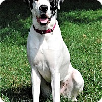 Adopt A Pet :: Lilly - Springfield, IL