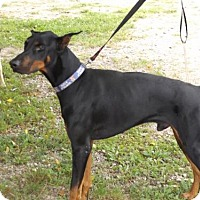 Adopt A Pet :: Dawson - Zaleski, OH
