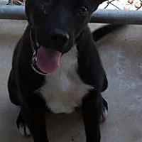 Adopt A Pet :: Oscar - Camden, AR