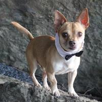 Adopt A Pet :: Bernard - Dalton, GA