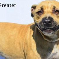 Adopt A Pet :: Greater - Fernandina Beach, FL