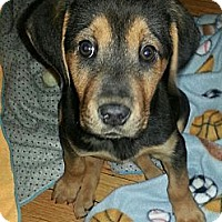 Adopt A Pet :: Jolene*ADOPTED!* - Chicago, IL