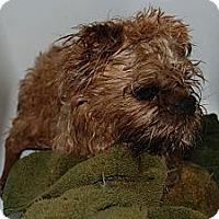 Adopt A Pet :: Machu - Ogden, UT