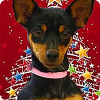 Adopt A Pet :: Itzie-Bitzie loves kids - Sacramento, CA