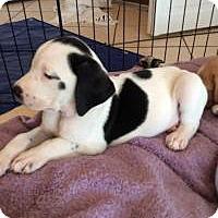 Adopt A Pet :: Lightening - Marlton, NJ