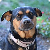 Adopt A Pet :: Lucky - Philadelphia, PA