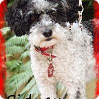 Adopt A Pet :: SIDNEY - Riverside, CA