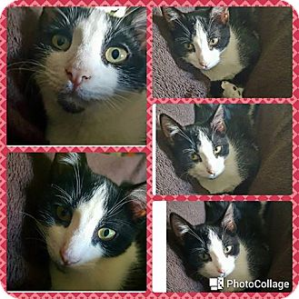 Domestic Shorthair Kitten for adoption in Nesquehoning, Pennsylvania - Aerial