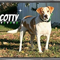 Adopt A Pet :: Scotty - Marion, KY