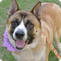 Adopt A Pet :: Yoshi - Helena, AL