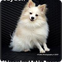 Adopt A Pet :: Cayden - Elmhurst, IL