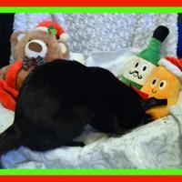 Adopt A Pet :: Calypso - North Battleford, SK