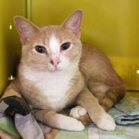Adopt A Pet :: Loira - Lynchburg, VA