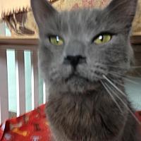 Adopt A Pet :: Skip - Alamogordo, NM