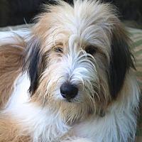 Adopt A Pet :: Wimberley - Norwalk, CT