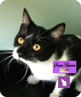 Domestic Shorthair Cat for adoption in Port Hope, Ontario - Dewey