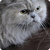 Adopt A Pet :: Lilac - Columbus, OH