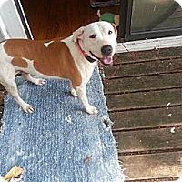 Adopt A Pet :: Sweetie Pie - Atlanta, GA
