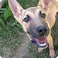 Adopt A Pet :: Fawn - Hastings, NY