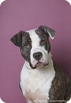 Terrier (Unknown Type, Medium) Mix Dog for adoption in Brookhaven, New York - Vicki