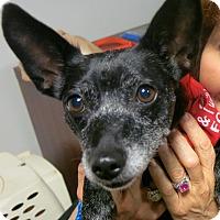 Adopt A Pet :: GRACIE - Ojai, CA