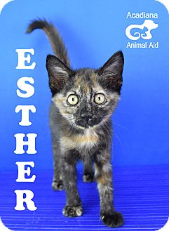 Domestic Shorthair Kitten for adoption in Carencro, Louisiana - Esther