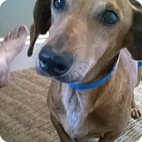 Adopt A Pet :: Otis - Jacobus, PA