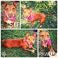 Adopt A Pet :: Zena - Converse, TX