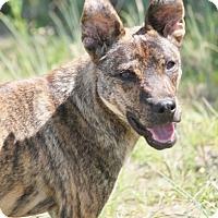 Adopt A Pet :: Chandler - Hooksett, NH