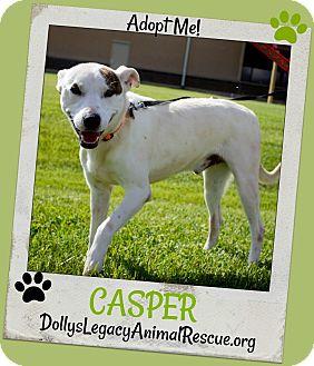 Pointer/Whippet Mix Dog for adoption in Lincoln, Nebraska - CASPER