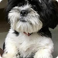 Adopt A Pet :: Oscar - Rockville, MD