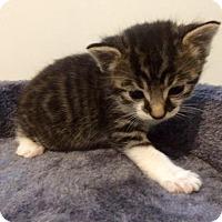 Adopt A Pet :: Mango - Northeast, OH
