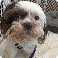 Adopt A Pet :: Polly-Pending Adoption - Omaha, NE