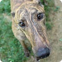 Adopt A Pet :: Winnie - Randleman, NC