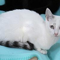 Adopt A Pet :: Virginia Street - Marietta, GA