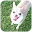 Photo 2 - Chihuahua Dog for adoption in Smithfield, Virginia - Baby