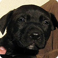 Adopt A Pet :: Baby Hunk - Oakley, CA