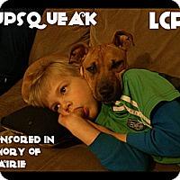 Adopt A Pet :: Pupsqueak - Toledo, OH