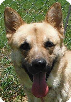 German Shepherd Dog/Husky Mix Dog for adoption in Cedartown, Georgia - 31886051