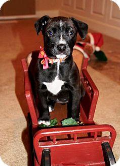 Terrier (Unknown Type, Medium) Mix Puppy for adoption in Kalamazoo, Michigan - Jubilee - Kelli B.