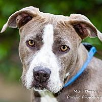 Adopt A Pet :: Rawhide - Westminster, CA