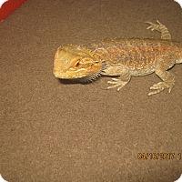 Adopt A Pet :: Hawkeye - Souderton, PA